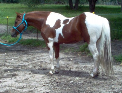 See All Stallion Listings Gays Muneco